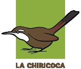 Chiricoca